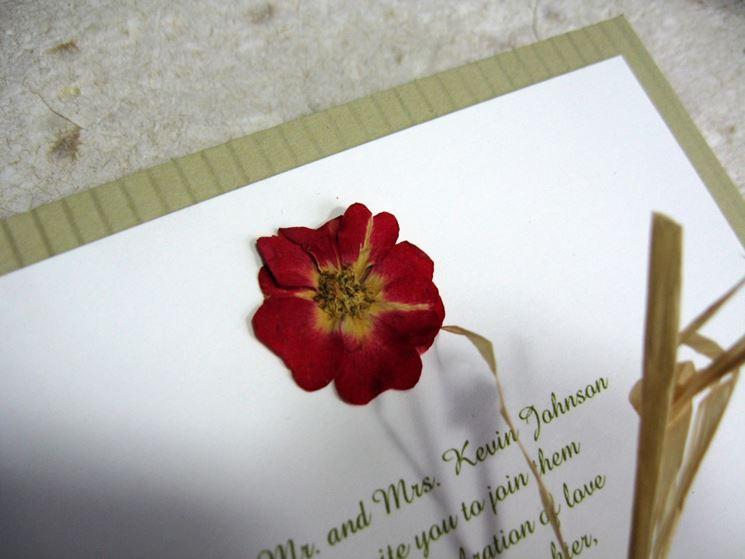 fiori secchi per comboniera
