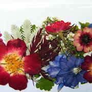 fiori secchi pressati