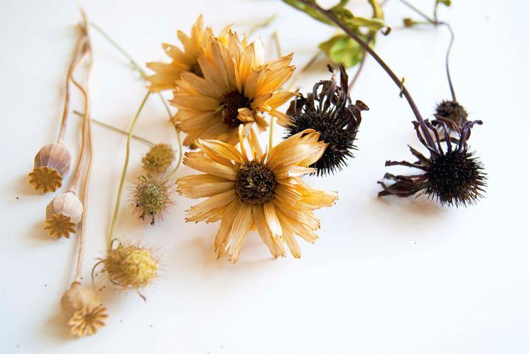 Fiori secchi vendita - Fiori secchi - Vendita fiori secchi