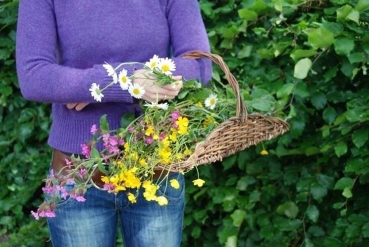 raccolta fiori
