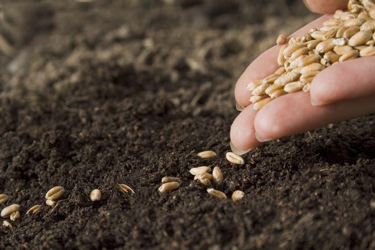 seminare piante