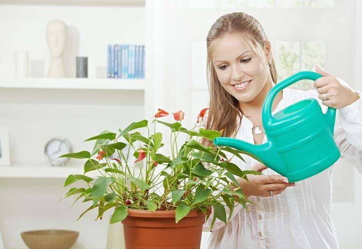 piante con fiore
