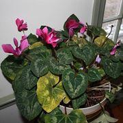 www.houseplant411.com