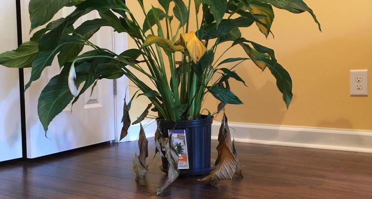 pianta appartamento freddo
