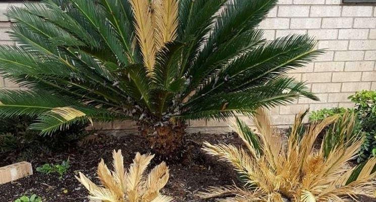 pianta esterno freddo