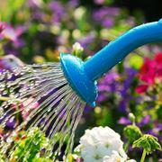 bagnare le piante