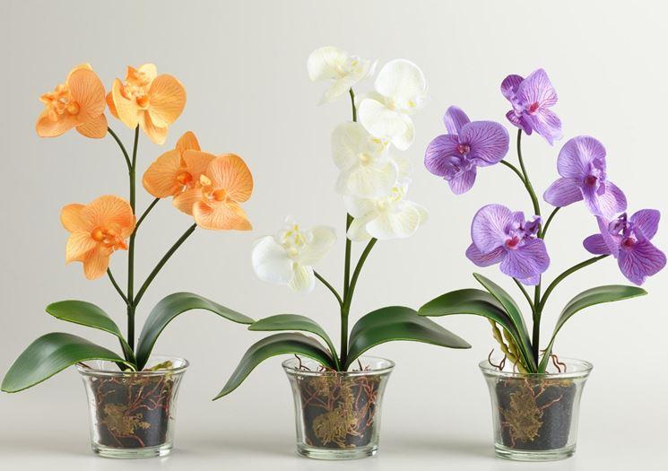 orchidea concime