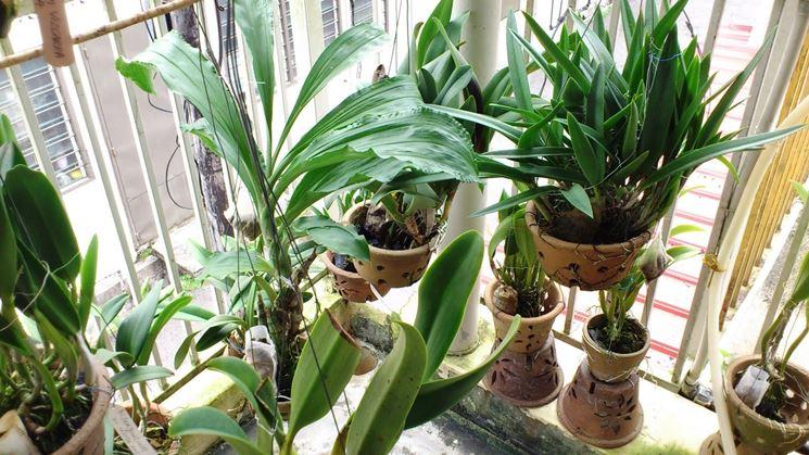 piante concimate
