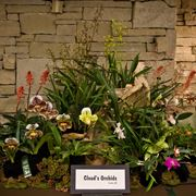 Esempi di orchidee variopinte