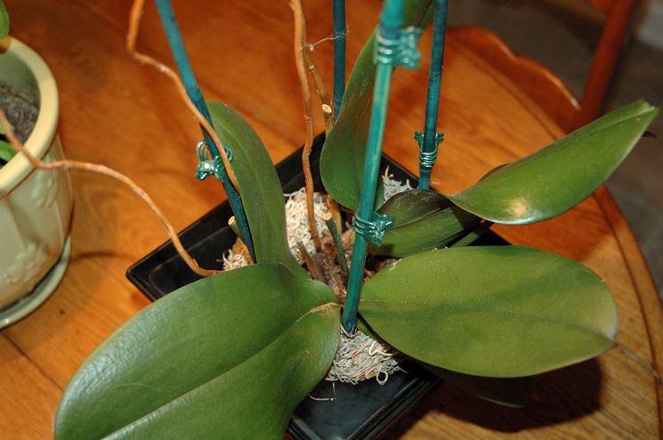 Il substrato di coltivazione delle orchidee