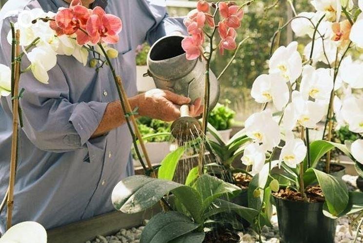 La corretta irrigazione delle orchidee