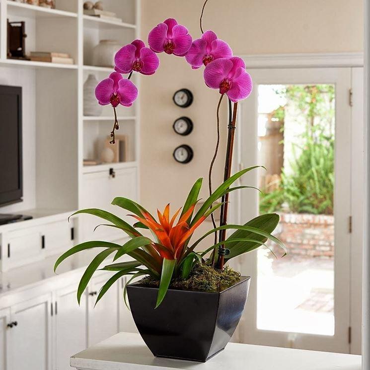 Posizione ottimale per le orchidee