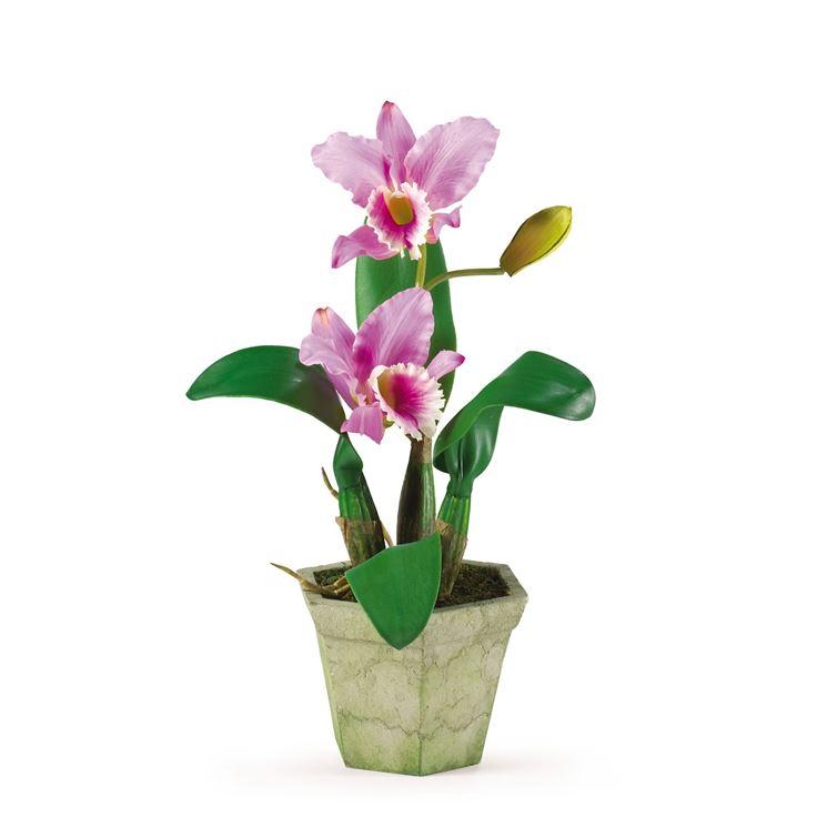 Orchidea cattleya rossa