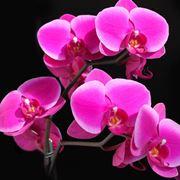 Fiore di orchidea.