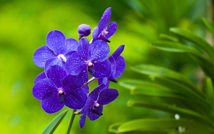 Varietà di orchidea.
