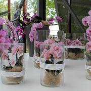 fiori orchidea