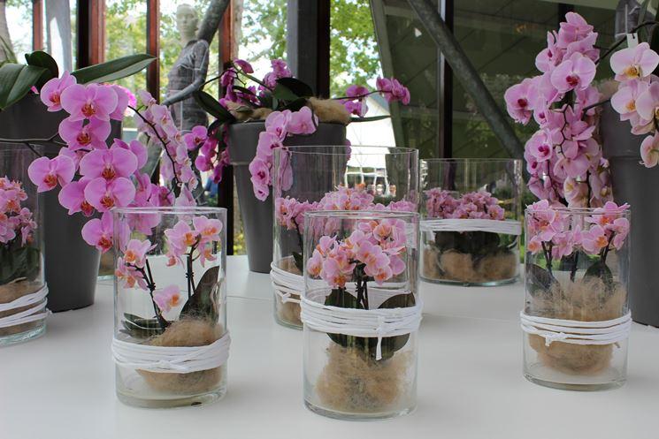 Orchidee in casa - Orchidee - Orchidee da coltivare in casa