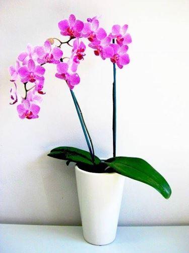 Vasi di plastica trasparenti per orchidee orchidando vaso - Vaso in gres per orchidee ...