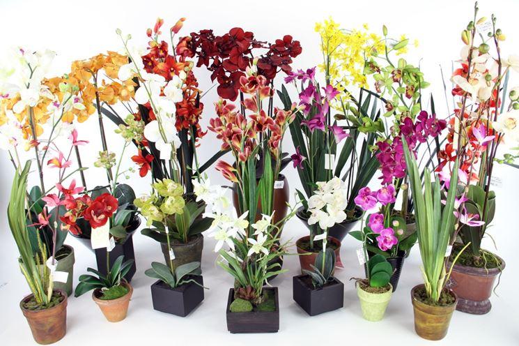 Orchidee in vaso orchidee orchidee coltivazione in vaso for Vaso orchidea