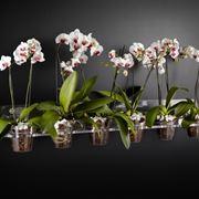 terra per orchidee
