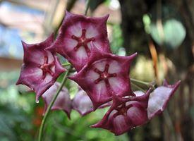 Serre orchidee orchidee serre di orchidee piante appartamento - Orchidee da esterno ...
