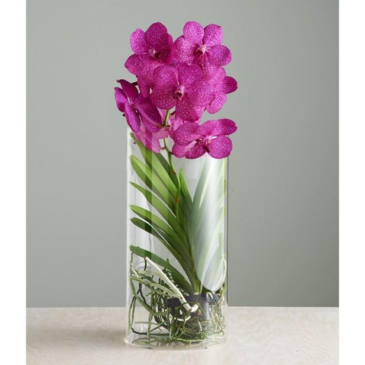 fiori orchidea vanda