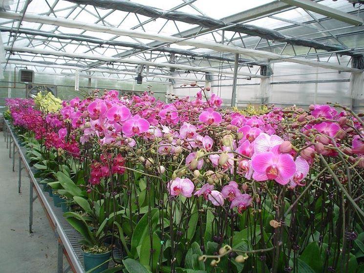 Come Coltivare Le Orchidee In Casa : Serre orchidee di piante