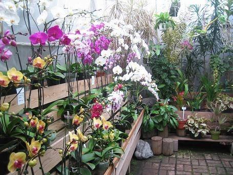 Serre orchidee orchidee serre di orchidee piante - Orchidee da appartamento ...