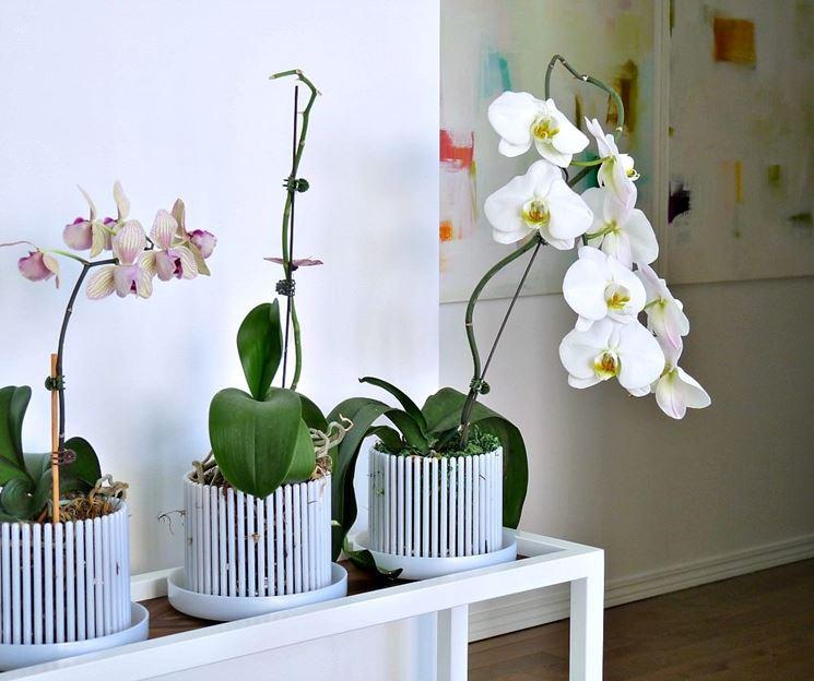 Vasi per orchidee orchidee vasi per orchidee - Orchidee da appartamento ...