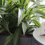 purificare l'aria piante