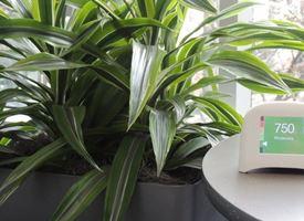 piante appartamento