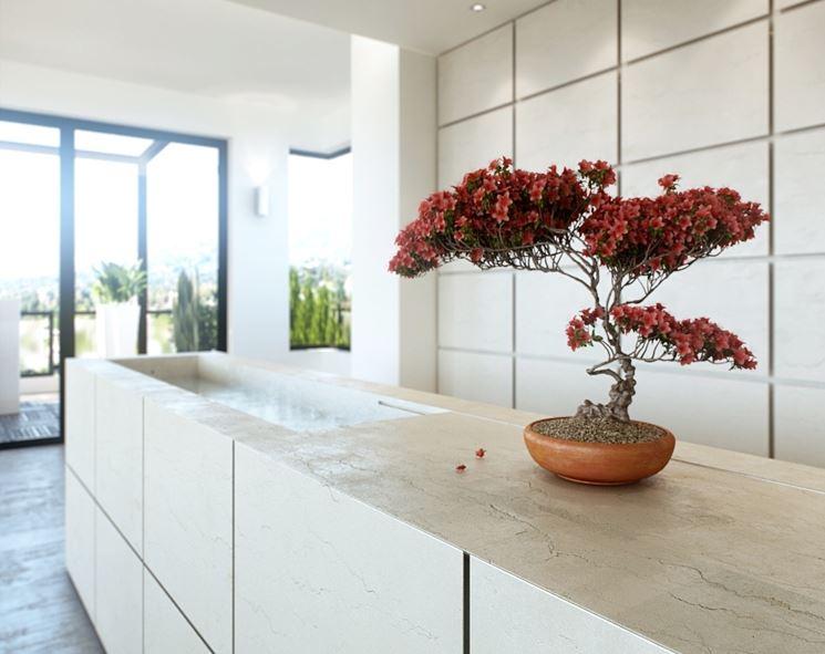 Alberi da appartamento piante da interno alberi per for Interior designs with plants
