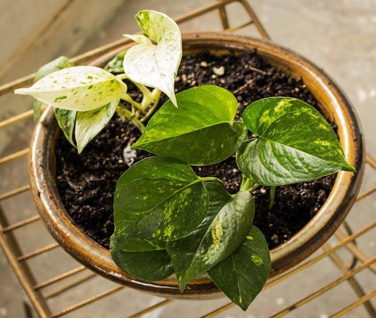Vaso con pianta da interno