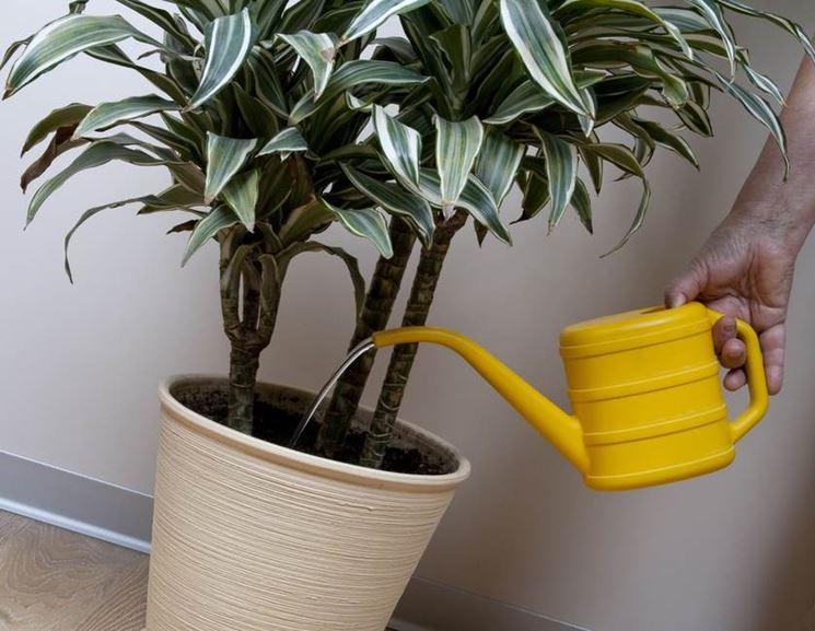 Irrigazione pianta da appartamento