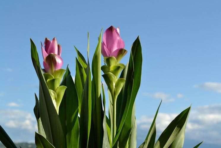 Foglie pianta interno