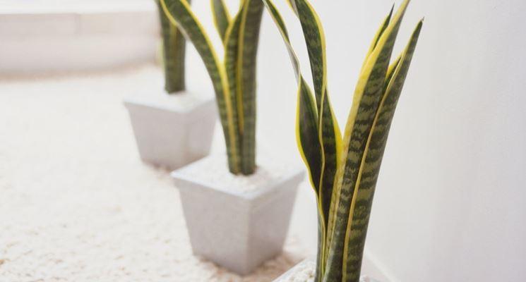 Piante da camera da letto piante da interno quali - Fiori in camera da letto ...