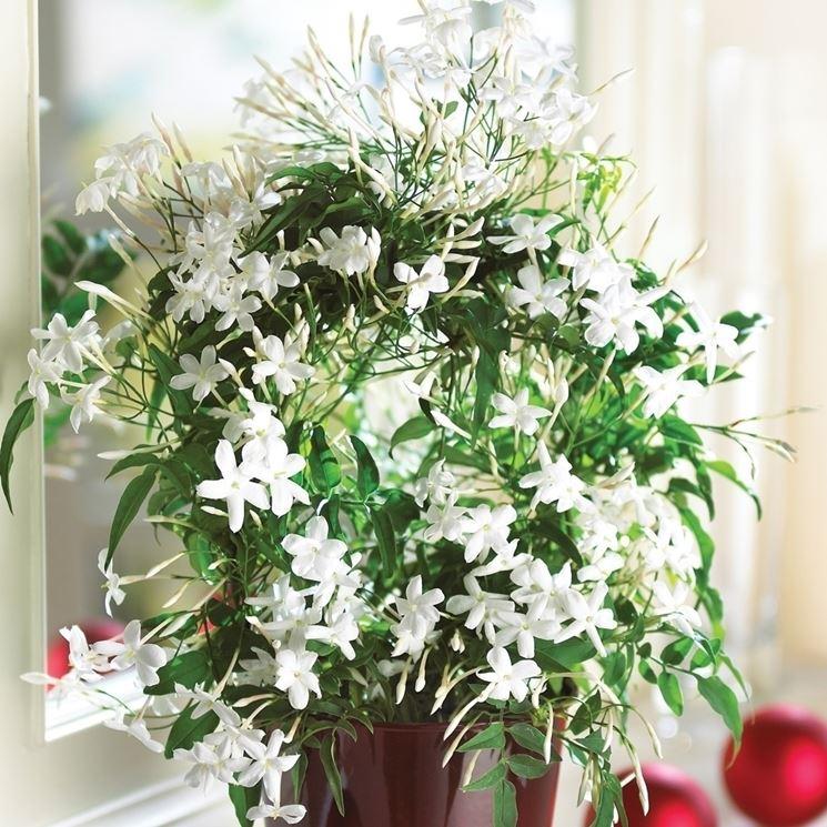 piante ornamentali x camera da letto ? casamia vansangiare - Piante Per Camera Da Letto