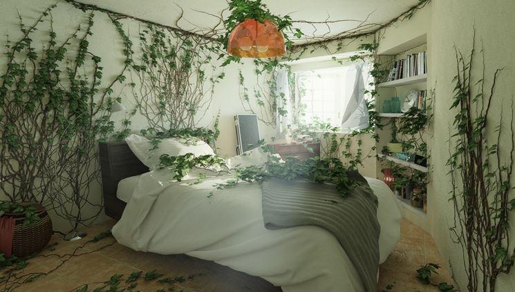 Piante da camera da letto piante da interno quali piante scegliere per la camera da letto - Piante per camera da letto ...