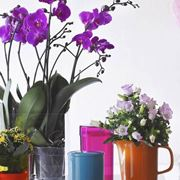 fiori casa