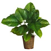 piante verdi da appartamento facili da tenere