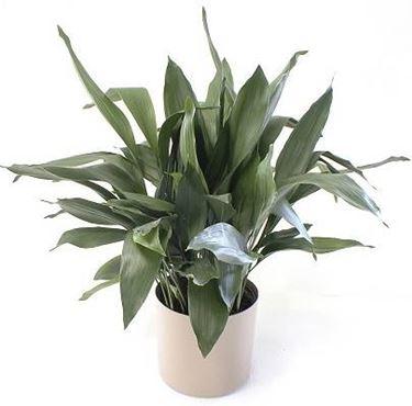 Piante da appartamento poca luce piante da interno - Piante da interno poca luce ...