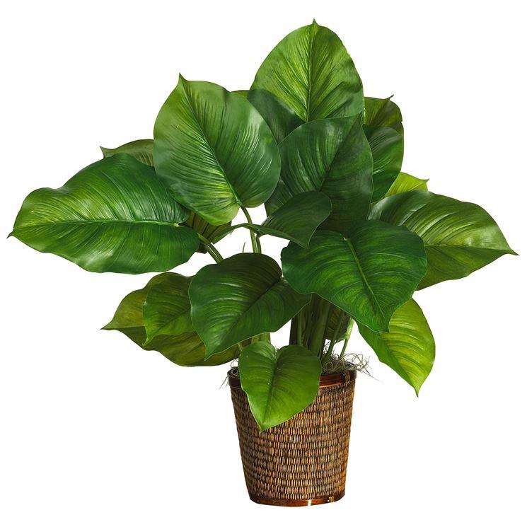 Piante da appartamento con poca luce piante da interno - Piante fiorite da appartamento ...