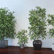 Piante da appartamento con poca luce piante da interno piante che necessitano di poca luce - Piante da interno resistenti ...