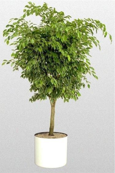 Piante da appartamento resistenti piante da interno piante resistenti da appartamento - Piante da interno resistenti ...