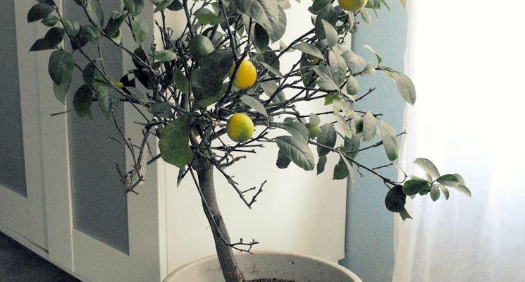 Piante da appartamento resistenti piante da interno for Piante da interno alte