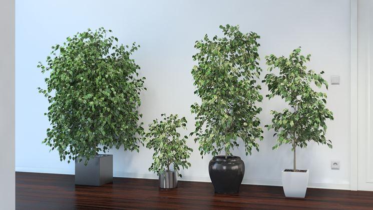 spesso Piante da appartamento resistenti - Piante da interno - piante  OF27