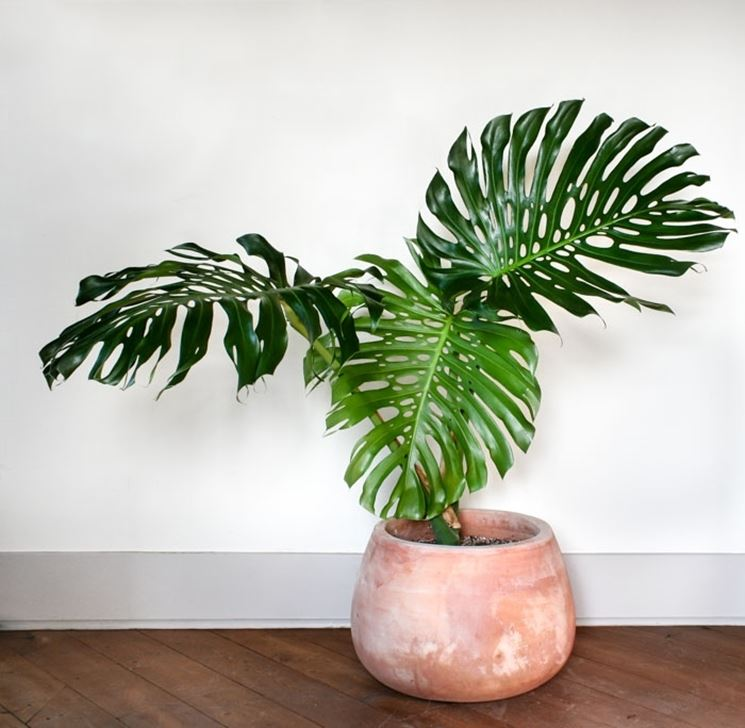 piante da appartamento resistenti e decorative