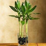 piante ornamentali da interno