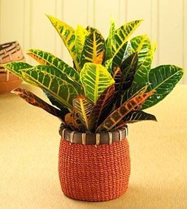 Piante da appartamento - Piante da interno - piante ...