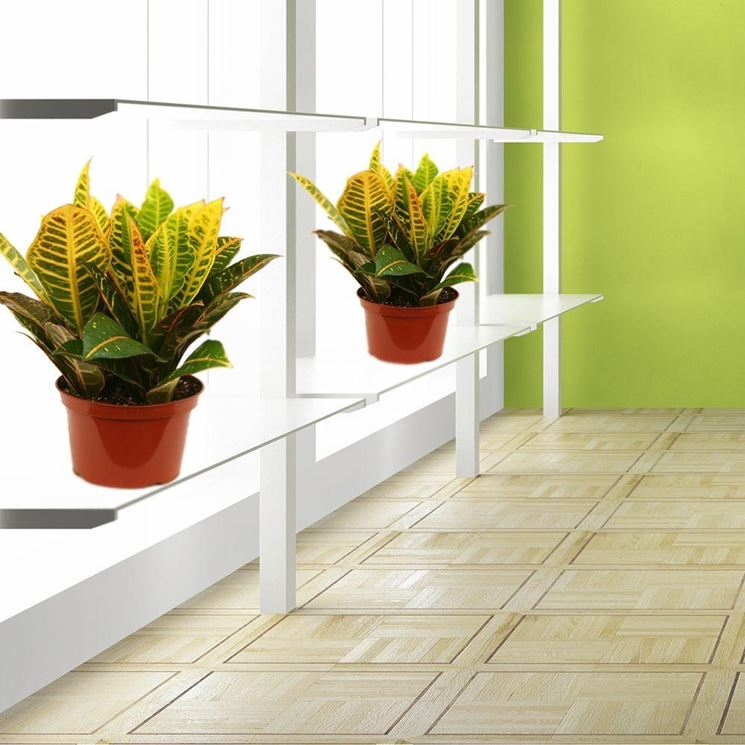 Piante da appartamento piante da interno piante for Piante da interno
